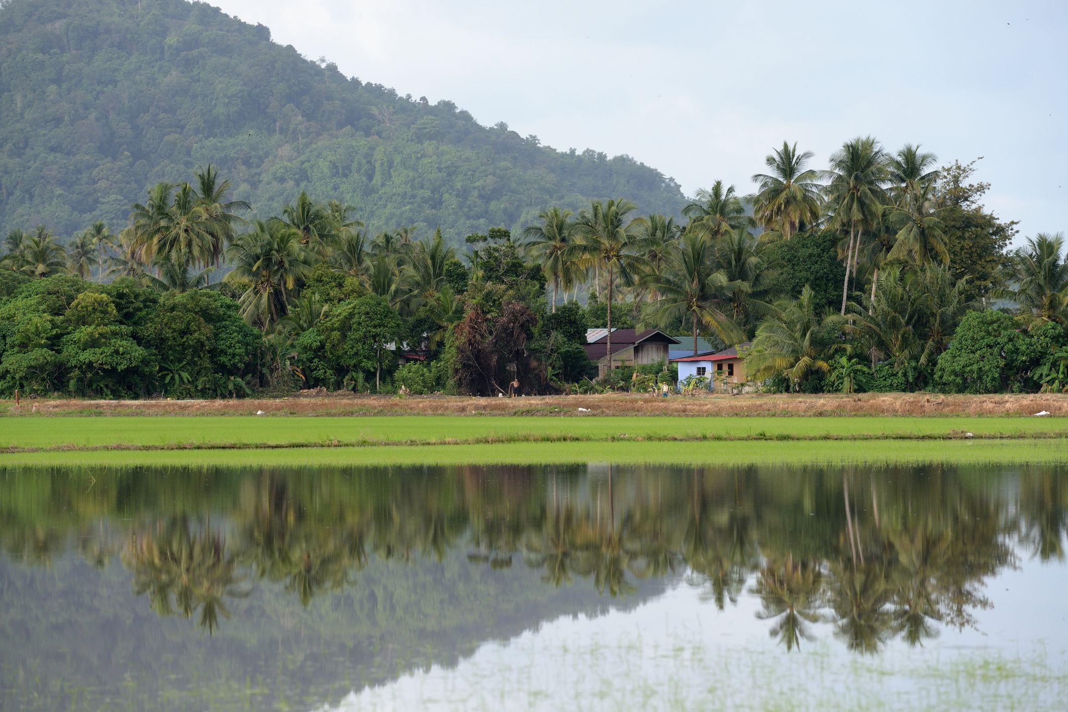 60 >> Balik Pulau Food, Travel, and Things to Do