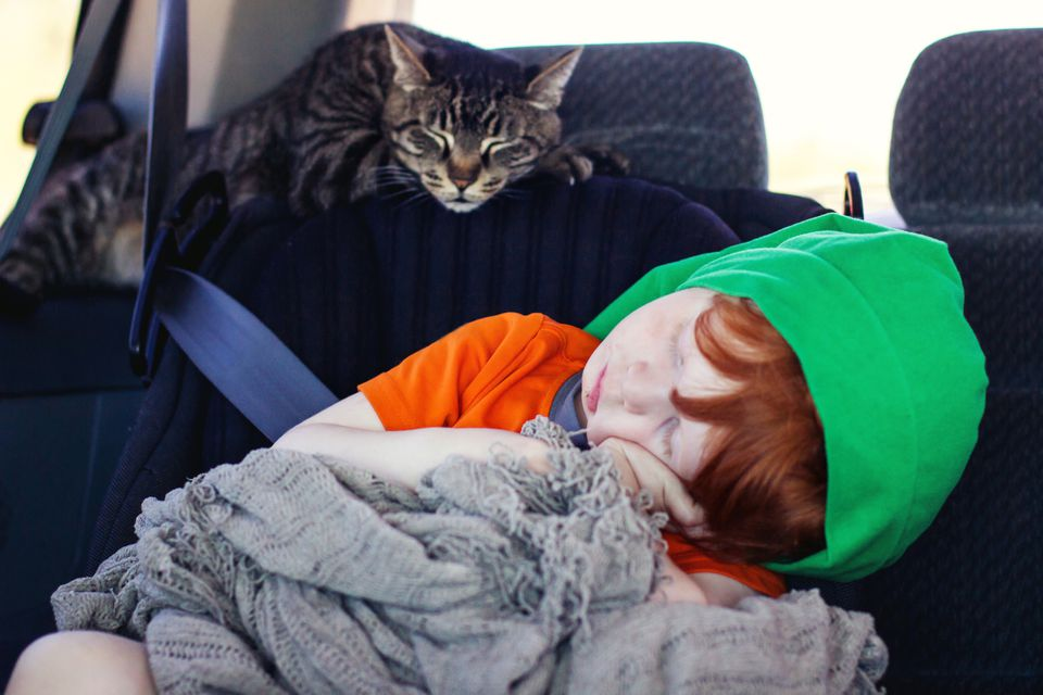 A cat and a child sleeping in a car