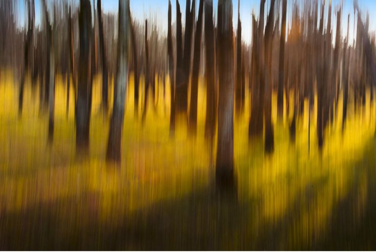 Abstract image of grove of trees