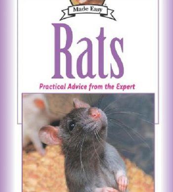 Can Rats Eat Gerbil Food