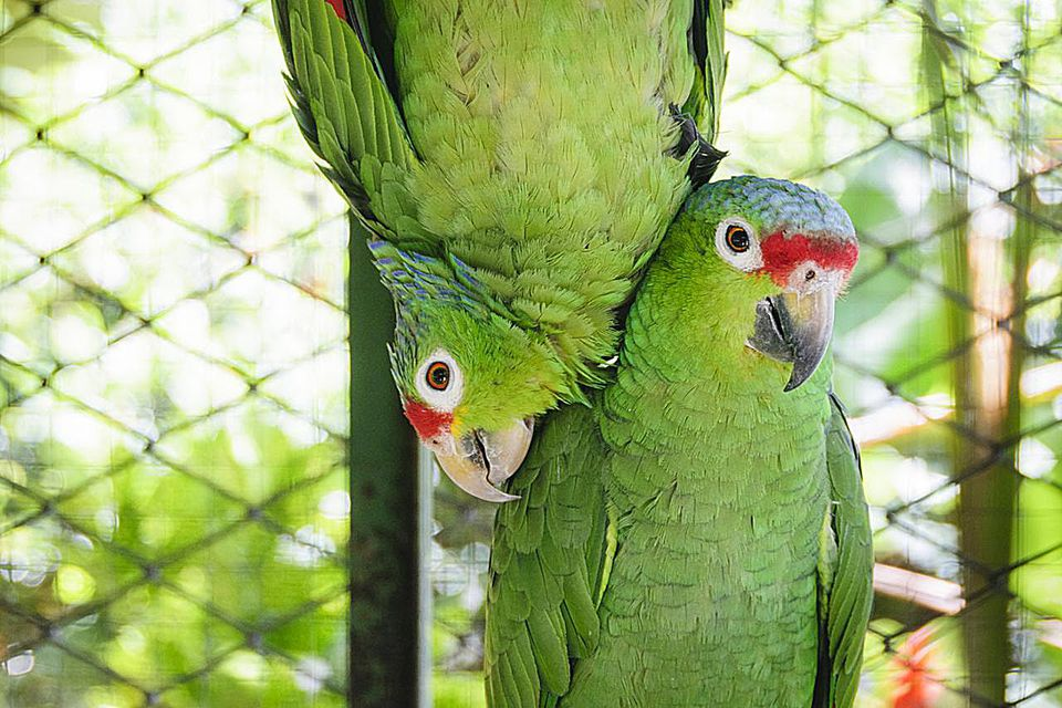 Parrots hanging out