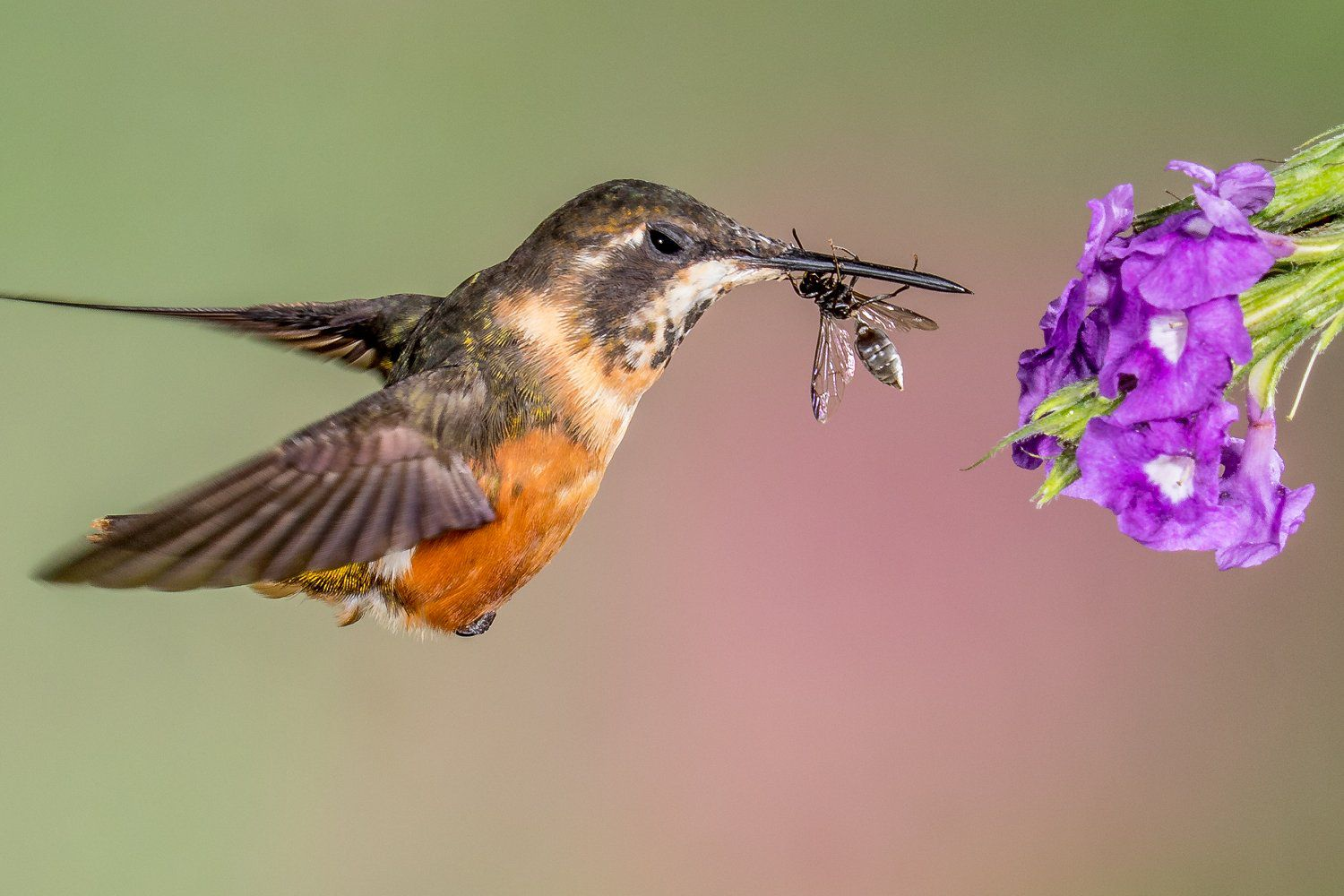 Do Hummingbirds Eat Bugs Yes Learn Why