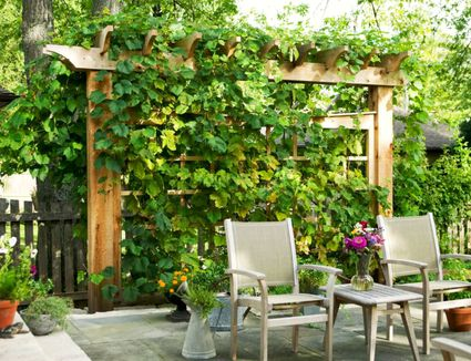 Ways To Gain Privacy In Your Yard - Privacy ideas for backyard