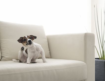 How to Treat Dog Dementia with Anipryl pics