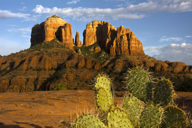 Cathedral Rock at Sunset, Prickly Pear Cactus in Foreground, Sedona, Arizona, USA