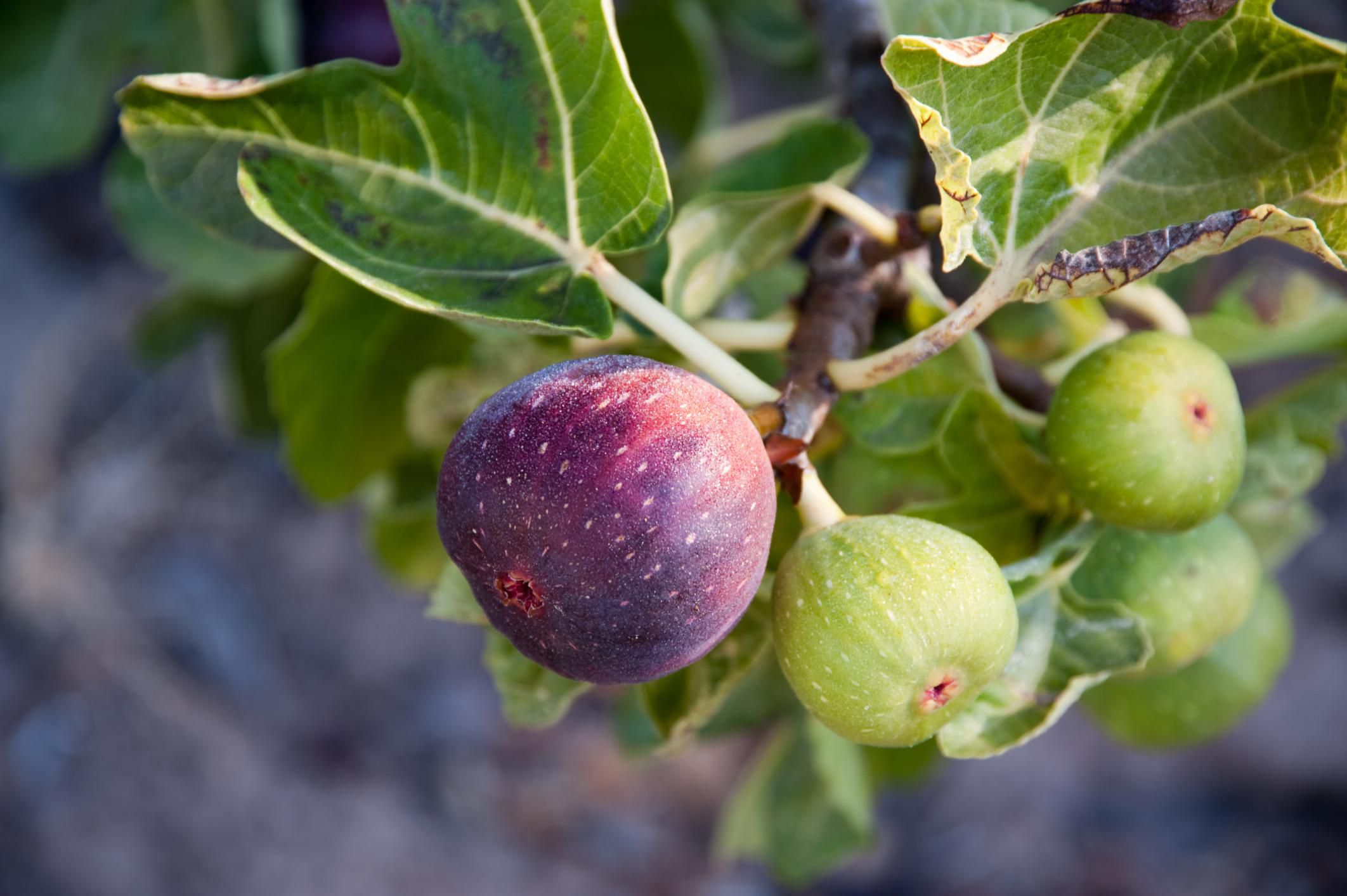 the best fruit to grow in your garden