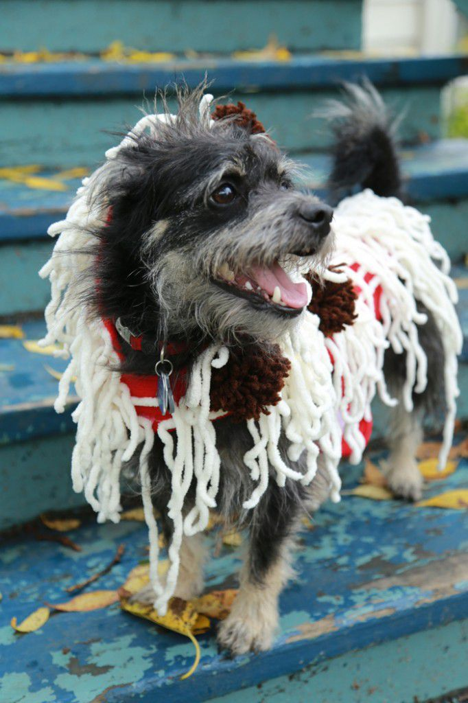 DIY Spaghetti And Meatballs Costume For Dogs