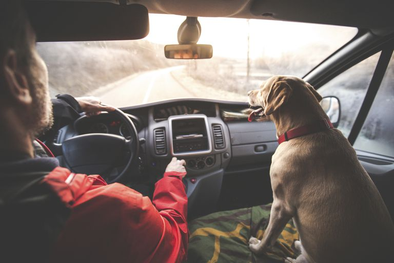 Man riding in car with dog