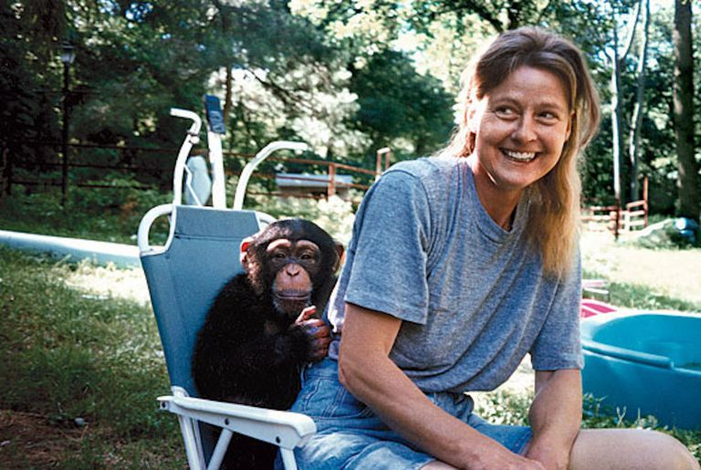 chimpanzee and woman on chair