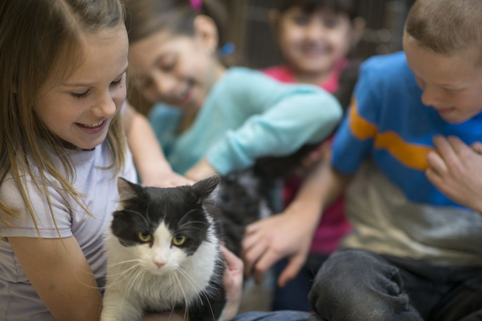 Kids play with cat in animal shelter