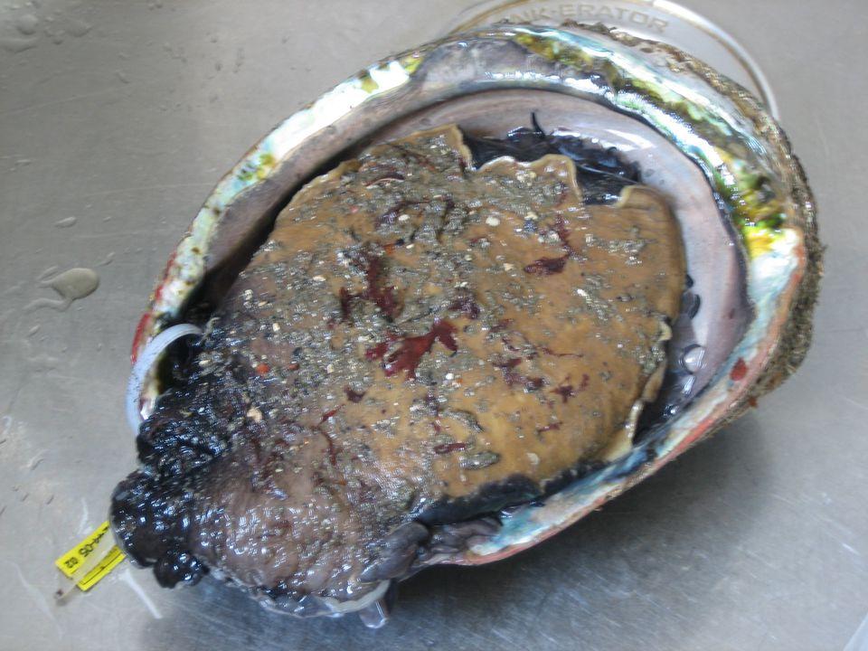 Whole Abalone