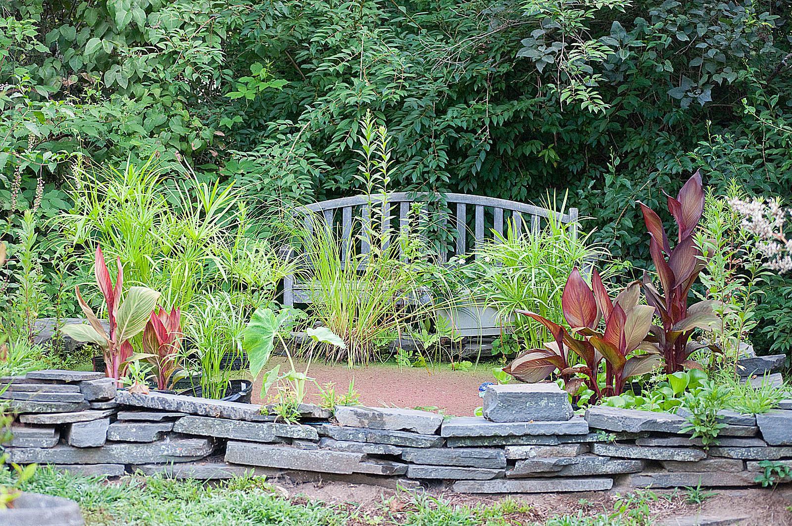 Winter Water Garden Care