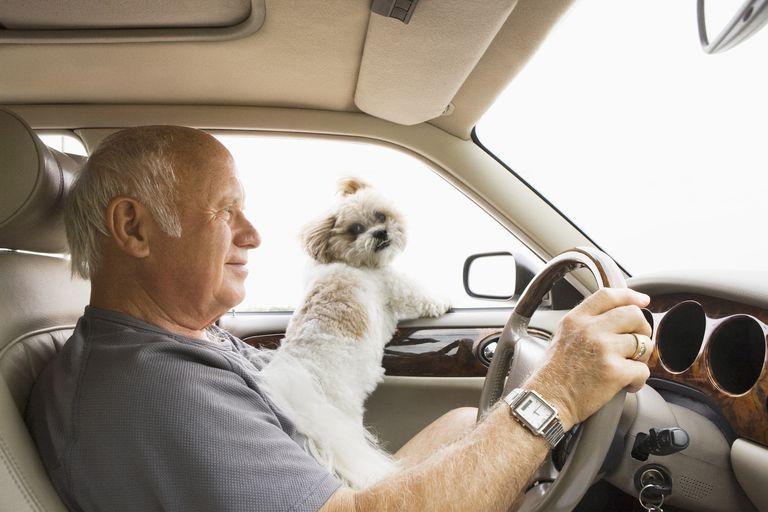 Senior Man Driving with Dog on his lap