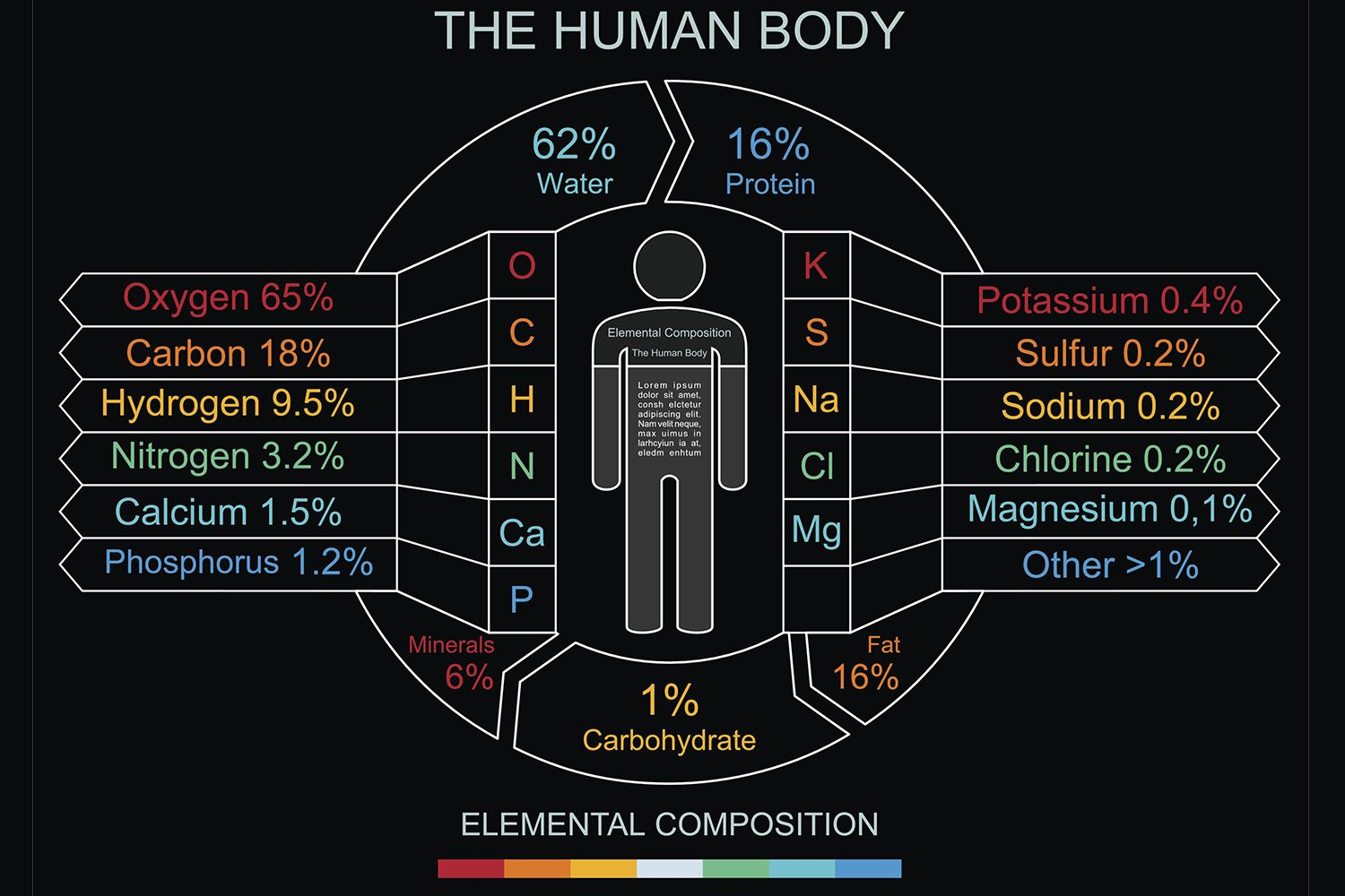 Elements In The Human Body And What They Do - How much is the human body worth infographic