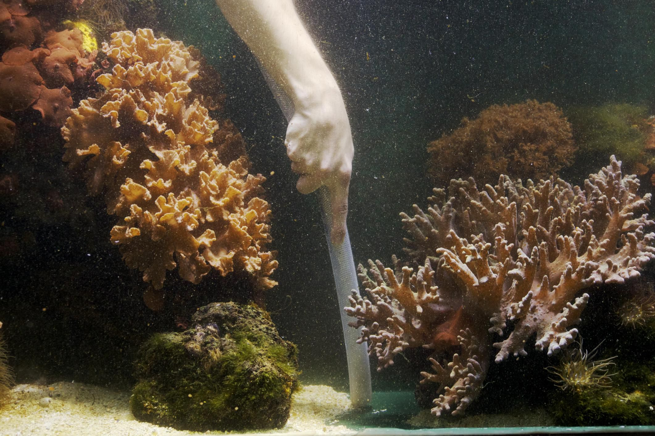 making glass aquarium repairs repair major leaks. Black Bedroom Furniture Sets. Home Design Ideas