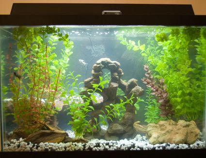 Reducing ammonia toxicity in a saltwater aquarium for Ammonia in fish tank