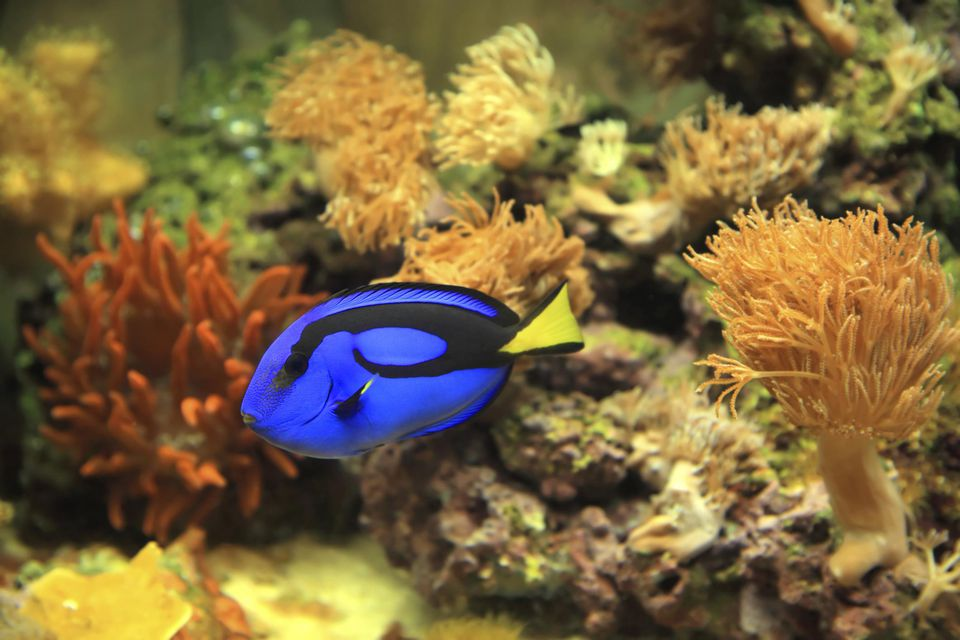 So you think having a saltwater aquarium is difficult for Spring water for fish tank