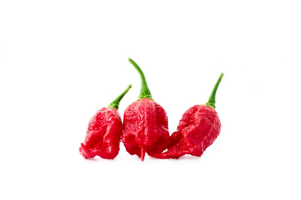 Close-Up Of Carolina Reapers Over White Background