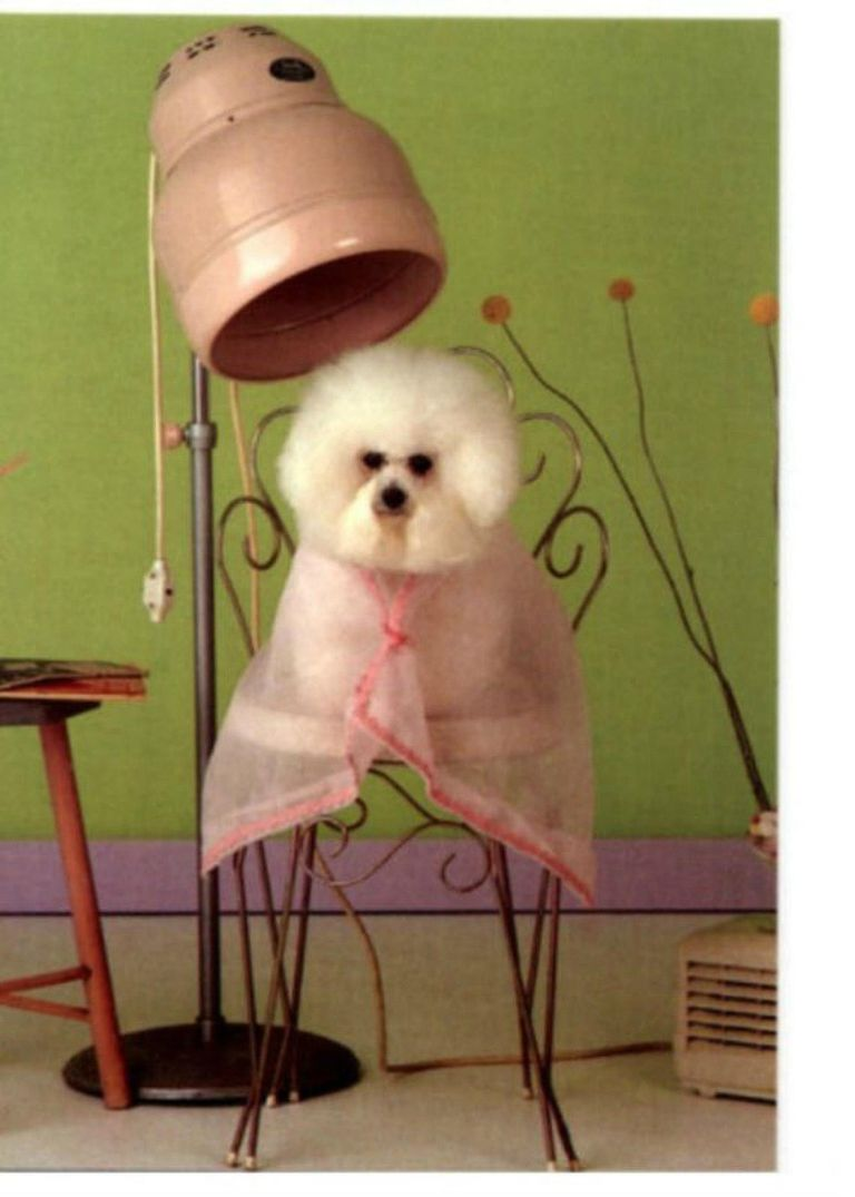 Learn how to become a pet groomer xflitez Image collections