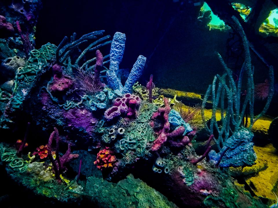 Coral Reef At National Aquarium