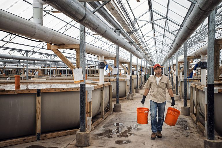 A large fish farm building interior with raised water tanks and breeding areas, and a man with buckets of water or feed.