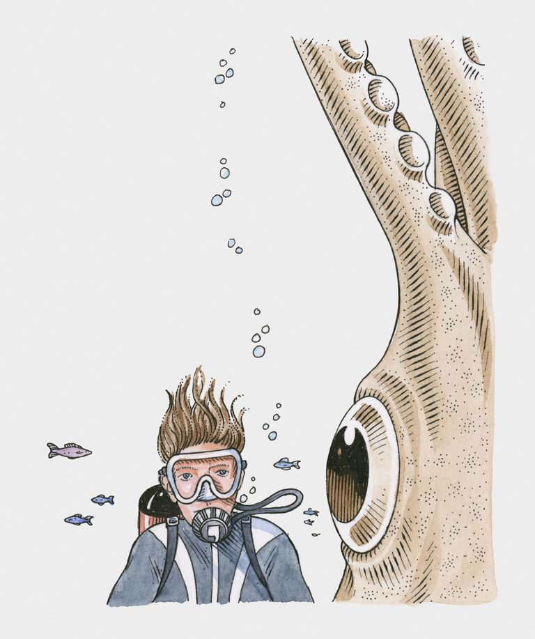 The eye of the colossal squid is about the same size as a dinner plate.
