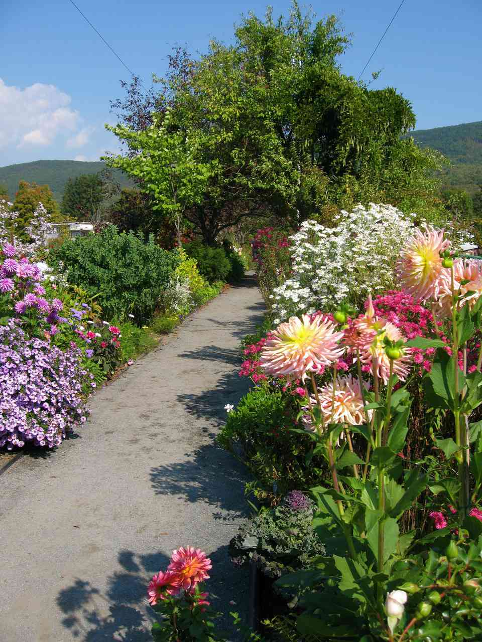 Bridge of Flowers Shelburne Falls