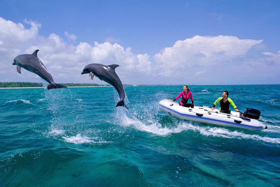 Bottlenose dolphins jumping over water next to boat,Freeport,Bahamas