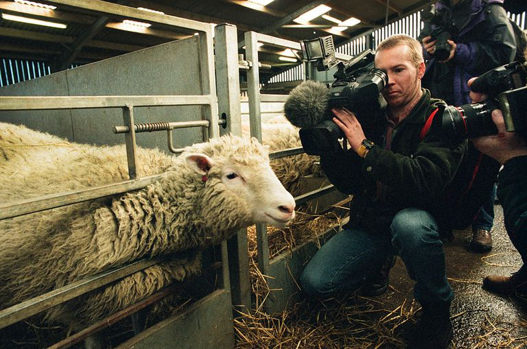 United Kingdom - Roslin - Dolly The Cloned Sheep Unveiled