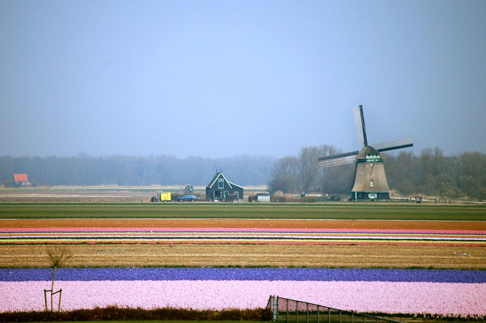 business tips for the netherlands