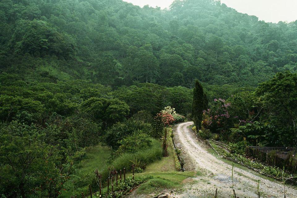 High angle view of a trail through a lush rainforest