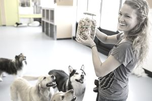 Market to Dog Owners by Their Target Segments