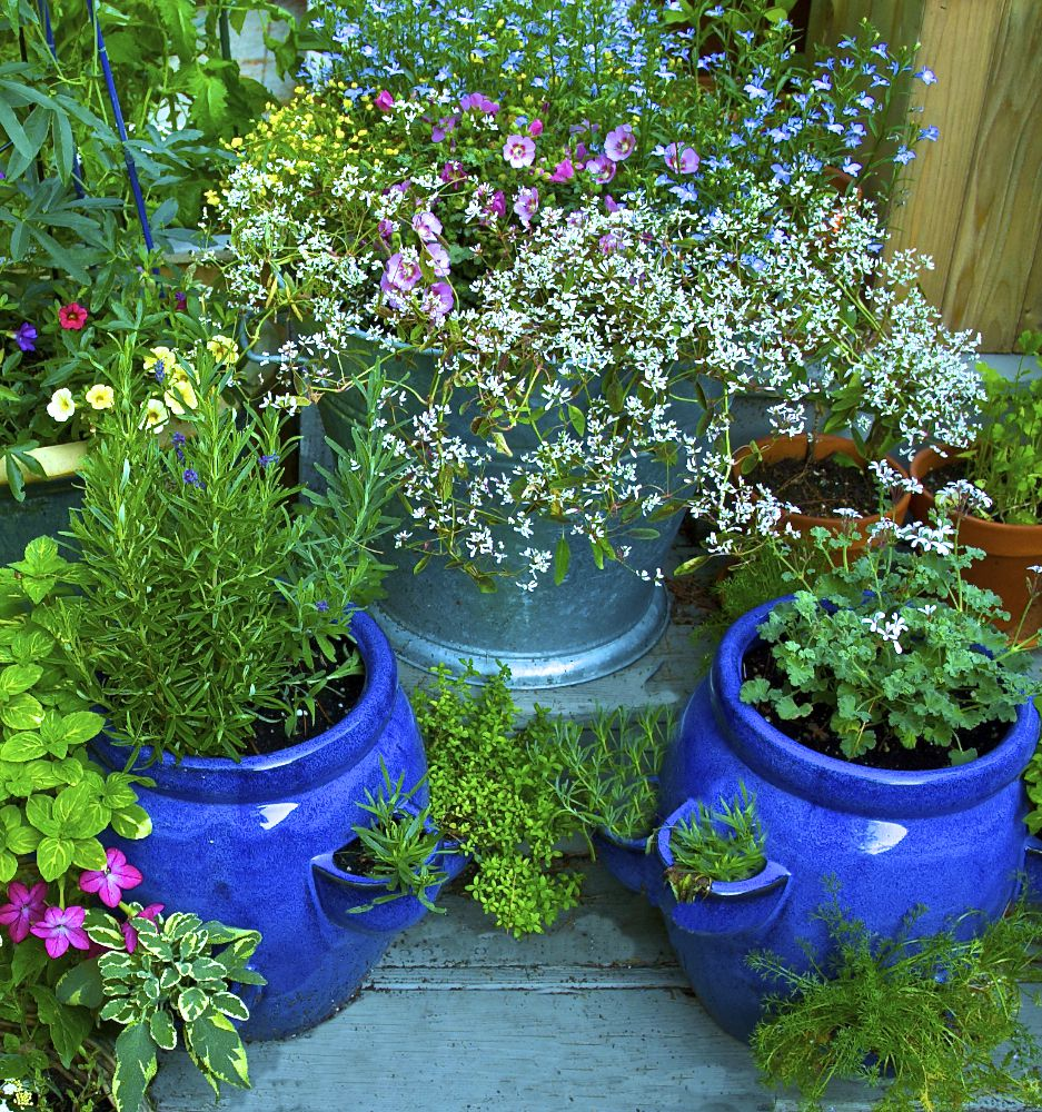 Container Home Interior: Container Gardening