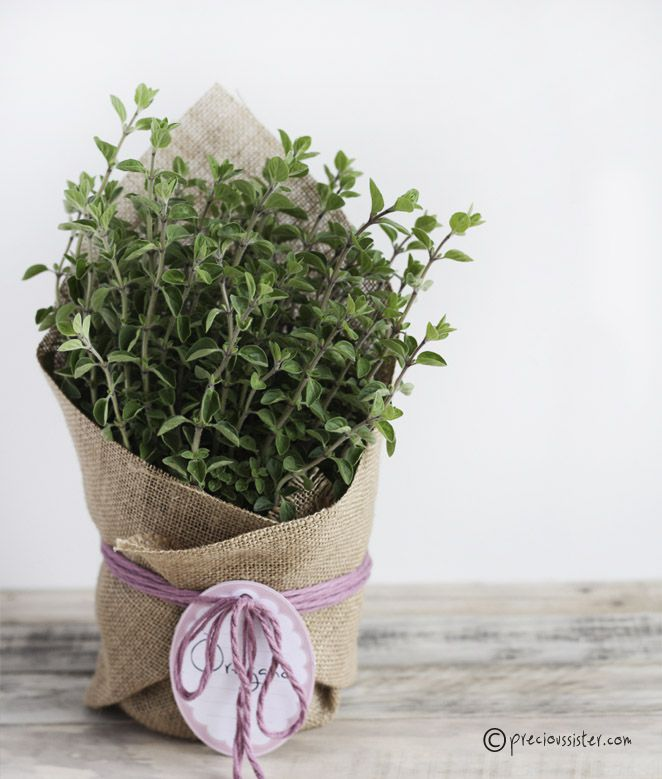 Creative hostess gifts that you can diy diy herb planter solutioingenieria Image collections