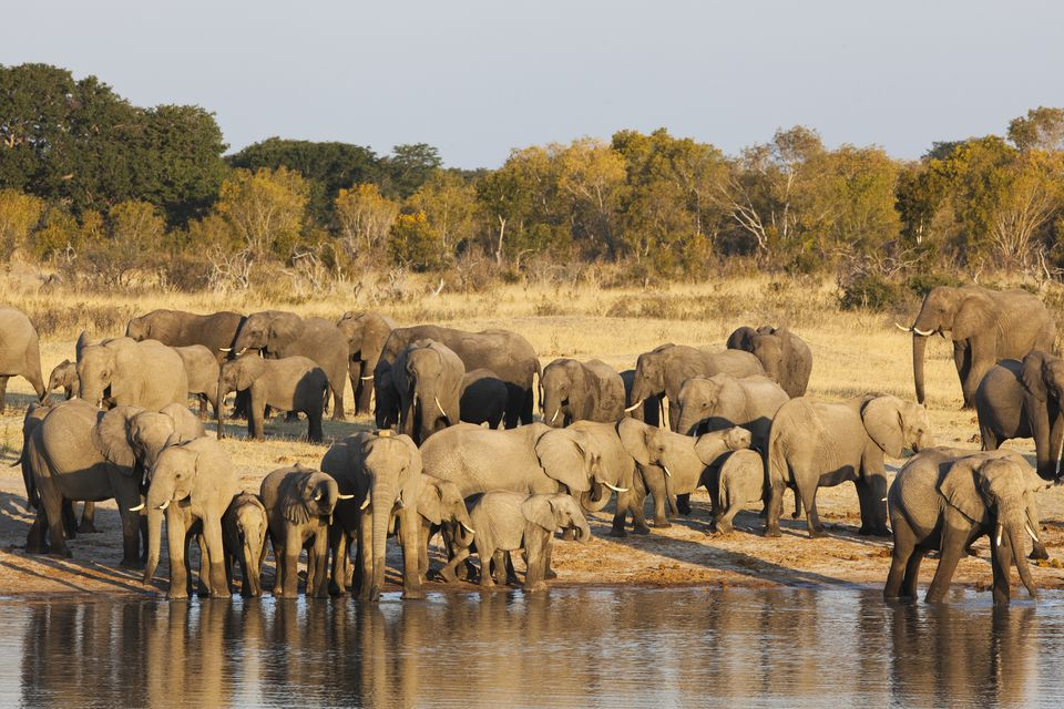 Eight of the Top Things to Do in Zimbabwe