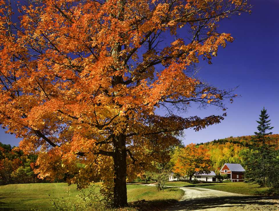 Fall Landscaping Ideas Trees