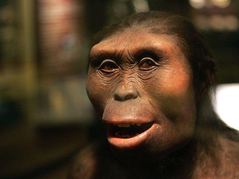 Reconstruction of Australopithecus afarensis