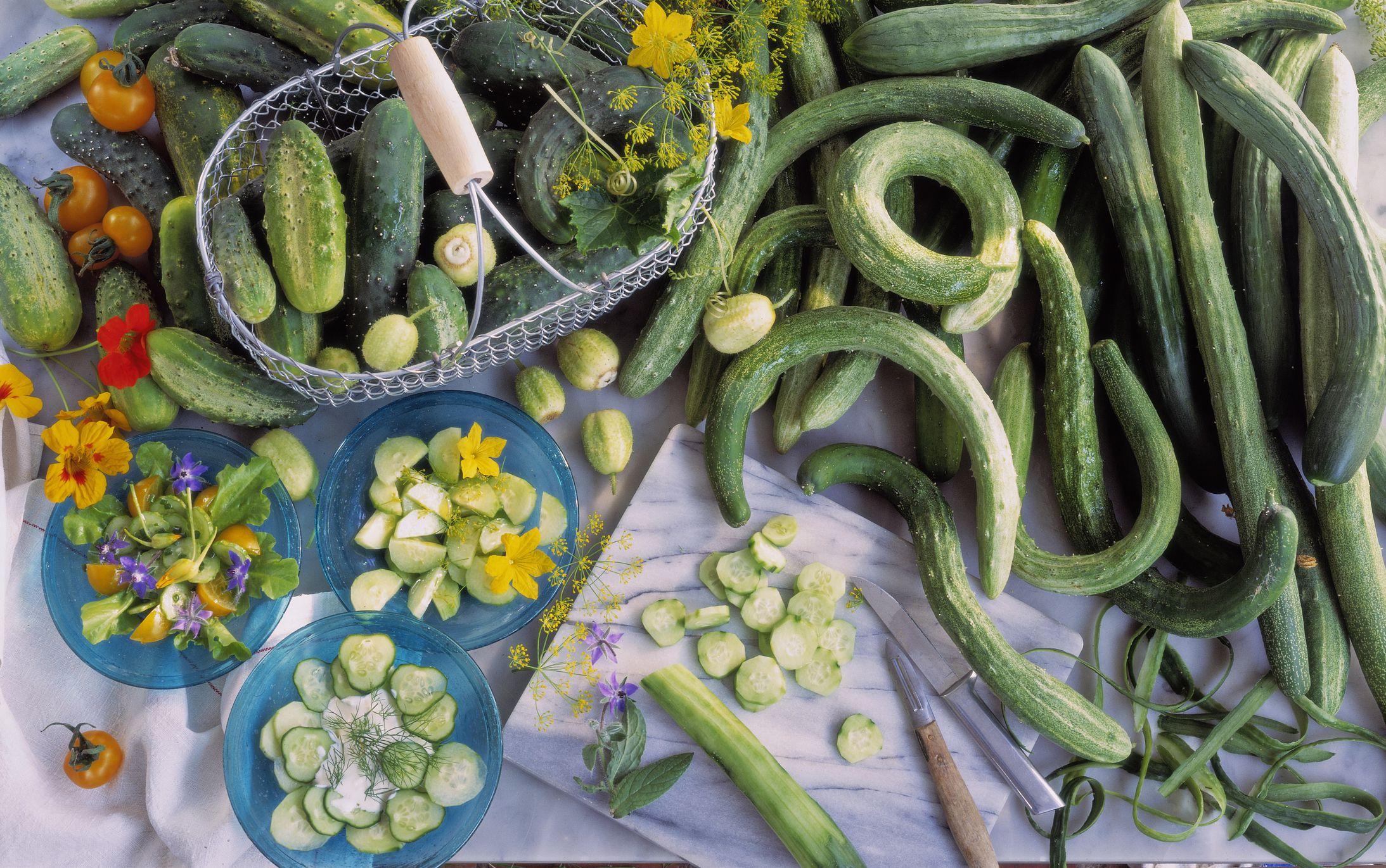 Cucumber Varieties Fro...