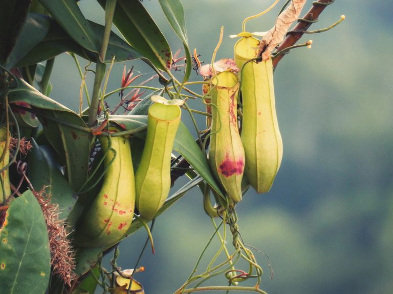 12 Plants That Eat Animals and How They Do It