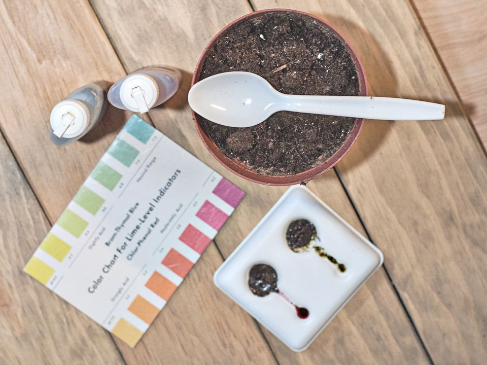 Testing Your Soil pH at Home