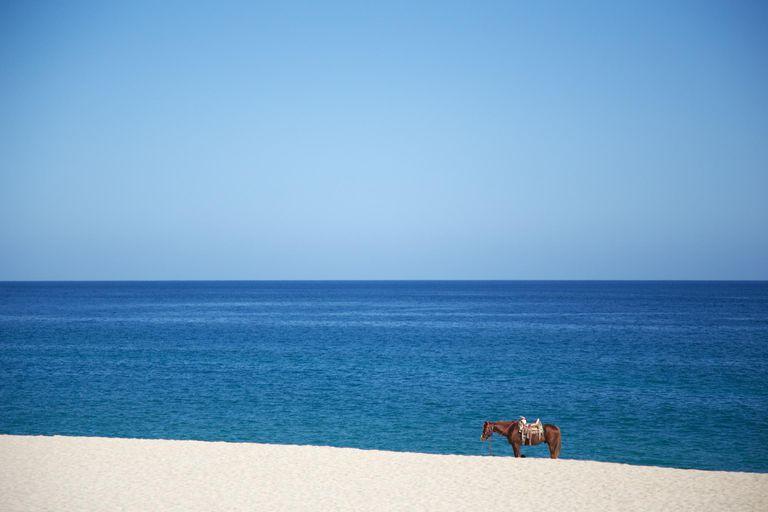 ¡Buenos días México! A horse on the beach