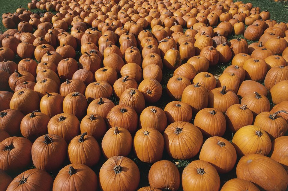 high angle view of a heap of pumpkins detroit michigan usa - Detroit Halloween Parties