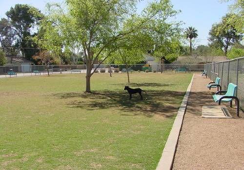 Dog Park Mesa Az