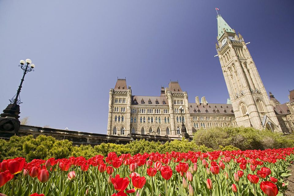 Tulips on Parliament Hill during Ottawa Tulip Festival. The Parliament buildings were built between 1859 and 1866, Ottawa, Ontario, Canada.
