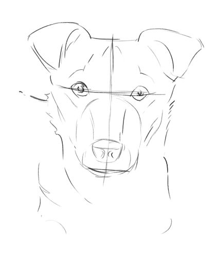 the dog drawing in progress