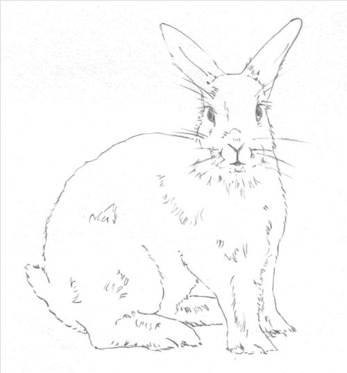 draw a rabbit draw fluff and whiskers