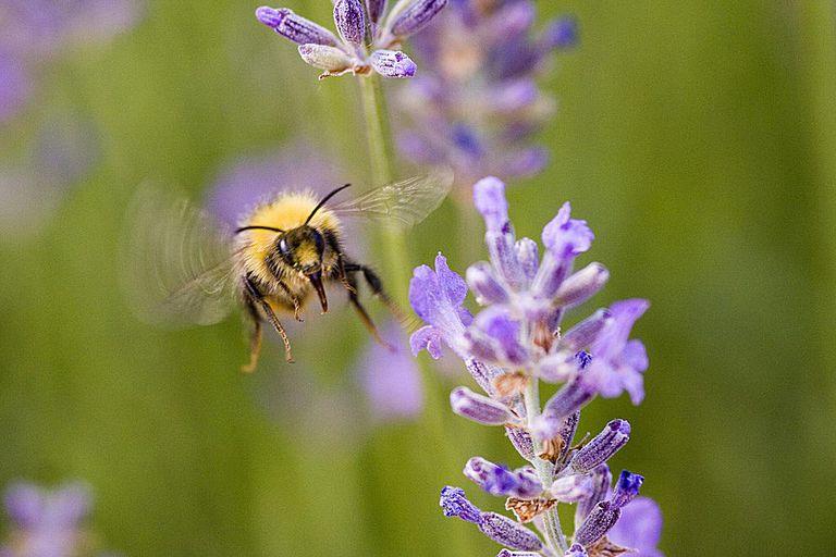 Incoming pollinator!