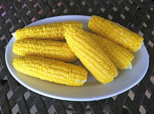 Picture of Corn on the Cob