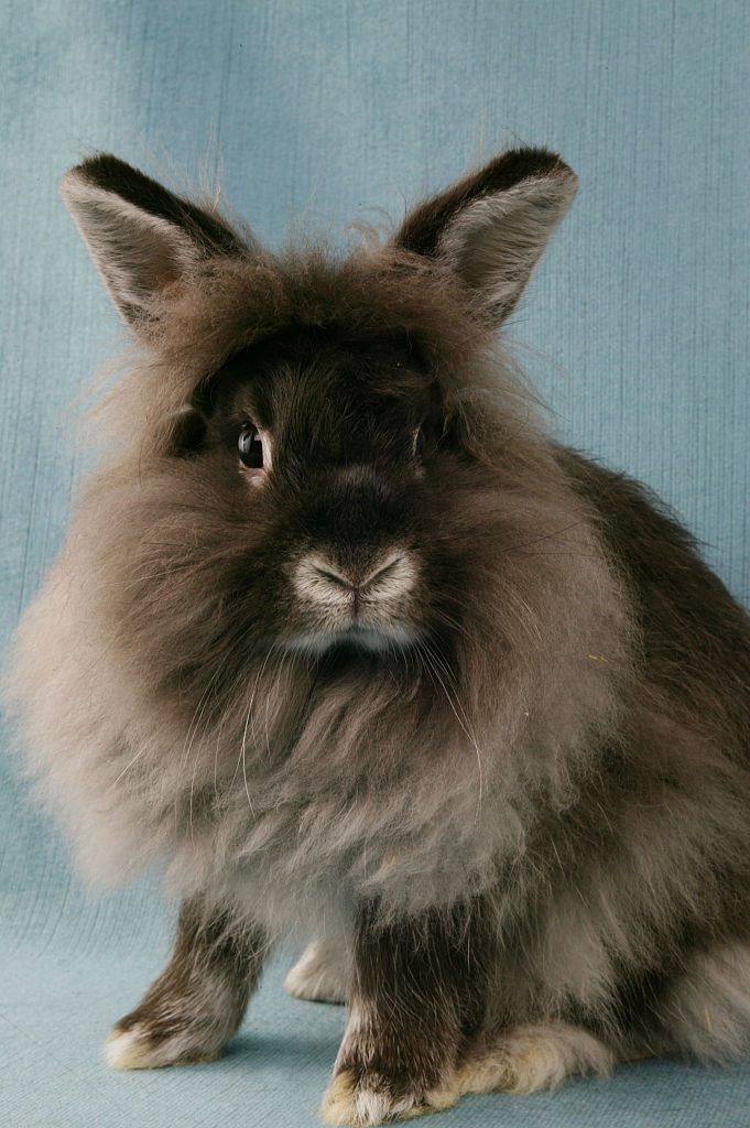 How to help rabbits who suffer from seizures for Can fish have seizures