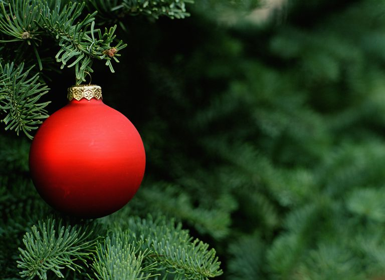 How to Get Rid of Christmas Tree Insects